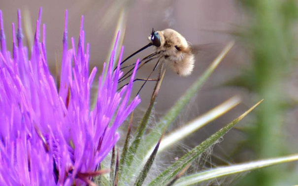 Die Zeit: Αν εξαφανιστεί η μέλισσα θα χαθεί και η ανθρωπότητα